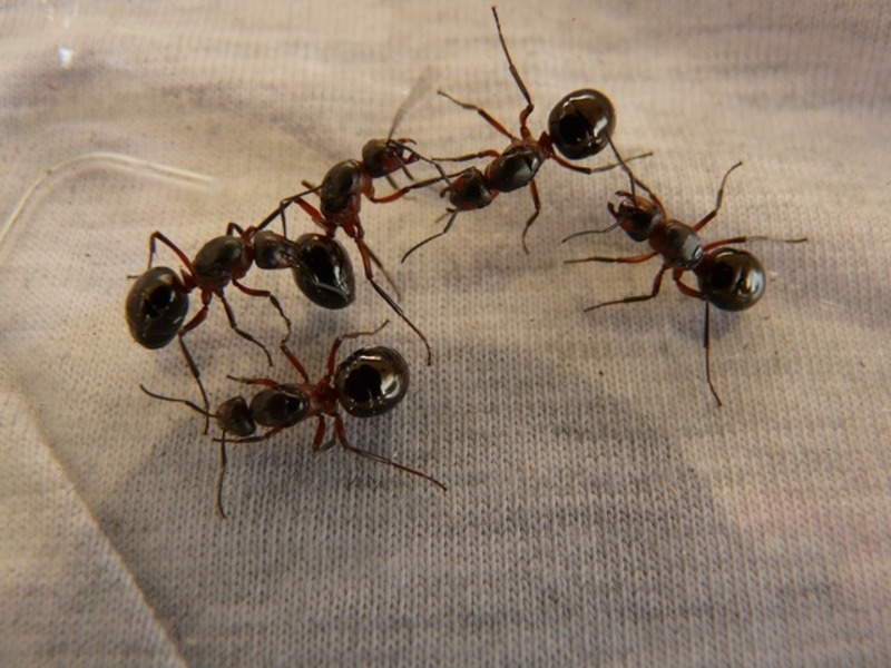 ants  - What To Do With A Summertime Ant Invasion