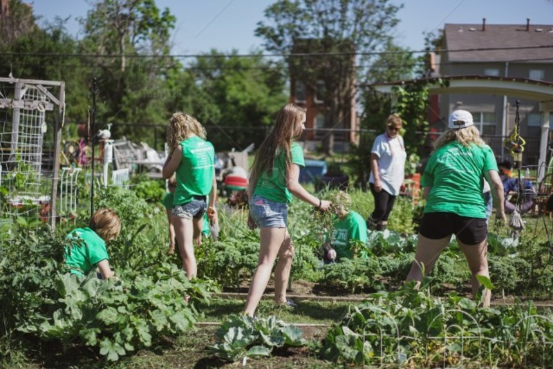 people volunteering at a community garden