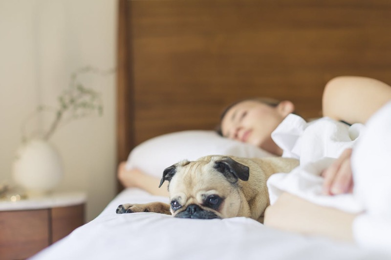 woman sleeping in bed with dog  - Tips to Relax and Sleep